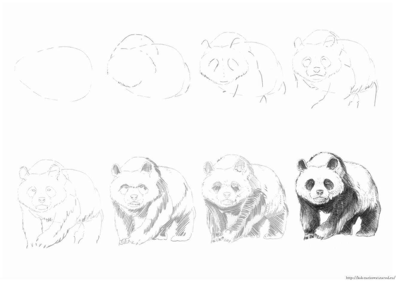 Рисовать картинки простым карандашом легко и красиво поэтапно