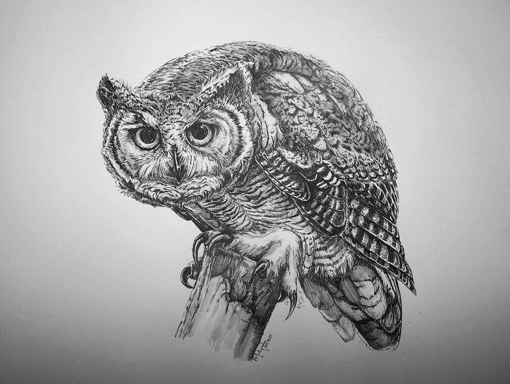 Рисунки карандашом совы