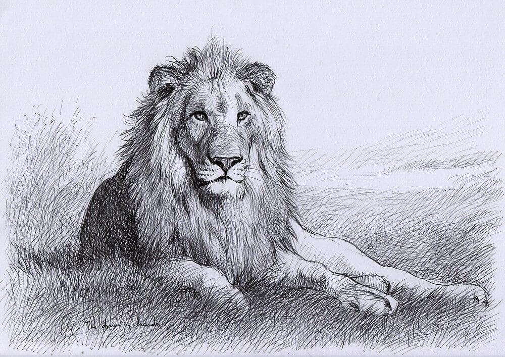 картинки с львами легкие дермантины скоро, если