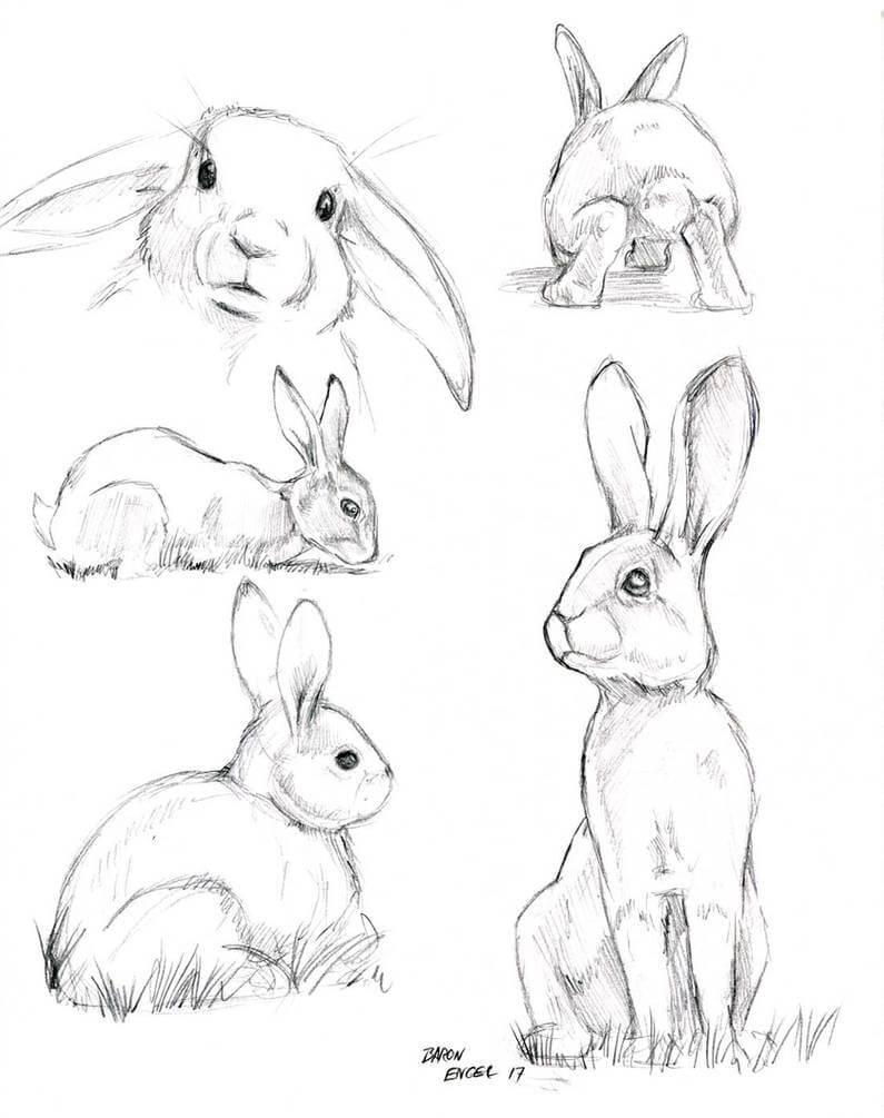 заяц карандашом поэтапно картинки очень полезен для