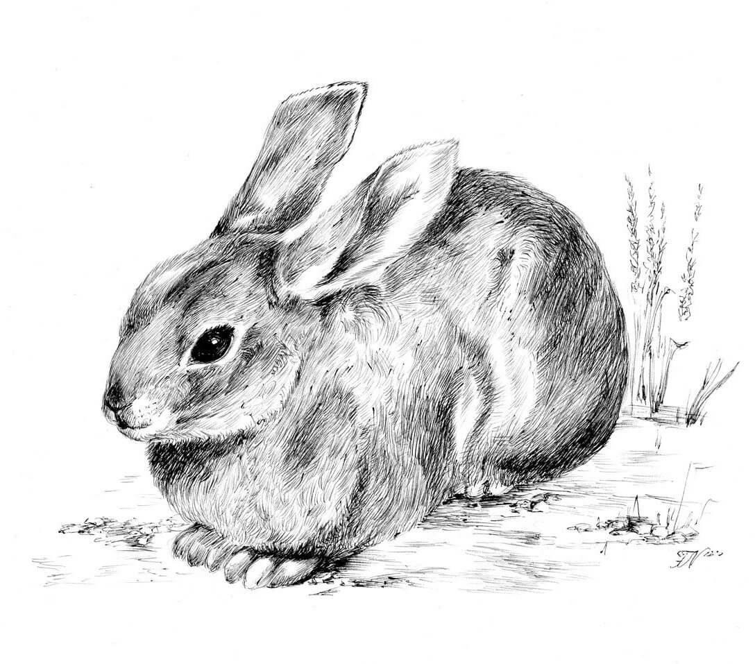 Картинка животного рисуем